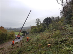 Ash tree felling Caerleon Rd 3_October 2020