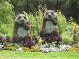 Newport-in-bloom--pandas
