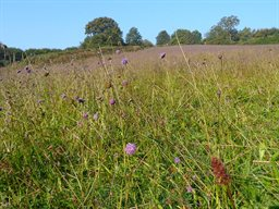 Wildlife-Walks_neutral-meadow
